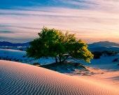 White Sands National Park Monument Sunset Cottonwood Tree Photography Fine art print New Mexico Landscape Photography