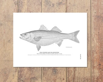 Striped Bass Art in Black and White - Fishing Poster Bass Print Beach Decor Nautical Decor Ocean Wall Decor Gifts For Dad Fishing Art