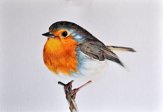 Original Drawing Realistic Colored Pencil Bird Cute Robin