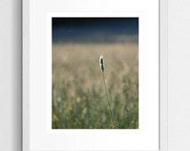 Nature Photography, Hazy Art, Meadow Grass, Dreamy Photo, Wild Meadow, Art Print, Hazy Skies, Summer Photo, Wild Flower, Wall Art, Landscape