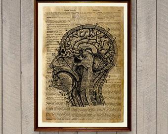 Cabin decor Dictionary print Human brain anatomy poster WA821