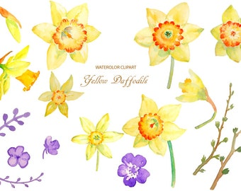 Hand painted watercolour yellow daffodils digital clipart printable instant download scrapbook spring flowers