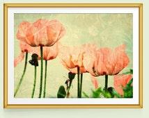 Poppy Print, Poppy Wall Art, Poppy Decor, Poppies Art, Fine Art Prints, Fine Art Photography, Pink and Green Decor, Pink and Green Art