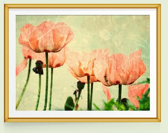 Poppy Print, Poppy Wall Art, Poppy Decor, Poppies Art, Fine Art Prints, Fine Art Photography, Pink and Green Decor, Pink and Green Art