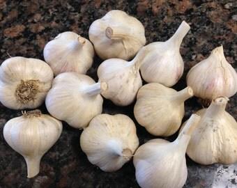 Music Seed Garlic USDA Certified Organic - Pre Orders