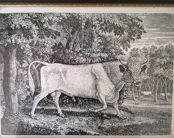 Thomas Bewick bull lithograph print Chillingham bull print from wood engraving framed picture