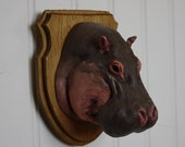 Hippo! - Large Mounted Animal Head Trophy
