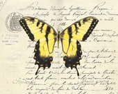 75 Tiger Swallowtail on French Document card
