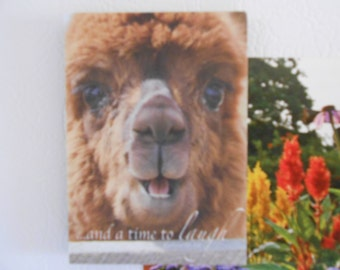Alpaca Refrigerator Magnets