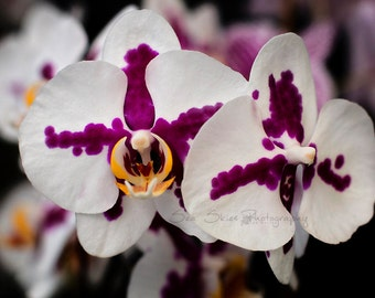 Orchid Photography, Fine Art Flower Photography, Orchid Art, Home Decor