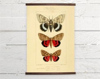 Beautiful Vintage Moths Night Butterflies Natural History Canvas Poster Print Wooden  Wall Chart Size A3 16x11