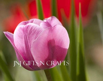 Pink Tulip Spring Flowers Digital Downloadable