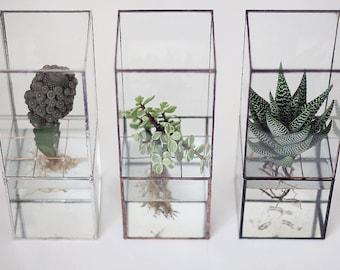 Hydroponic terrarium