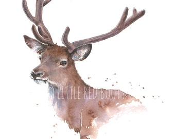 Stag - Print from watercolour Painting