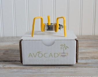 AvocadoSeed Planter - No Jar