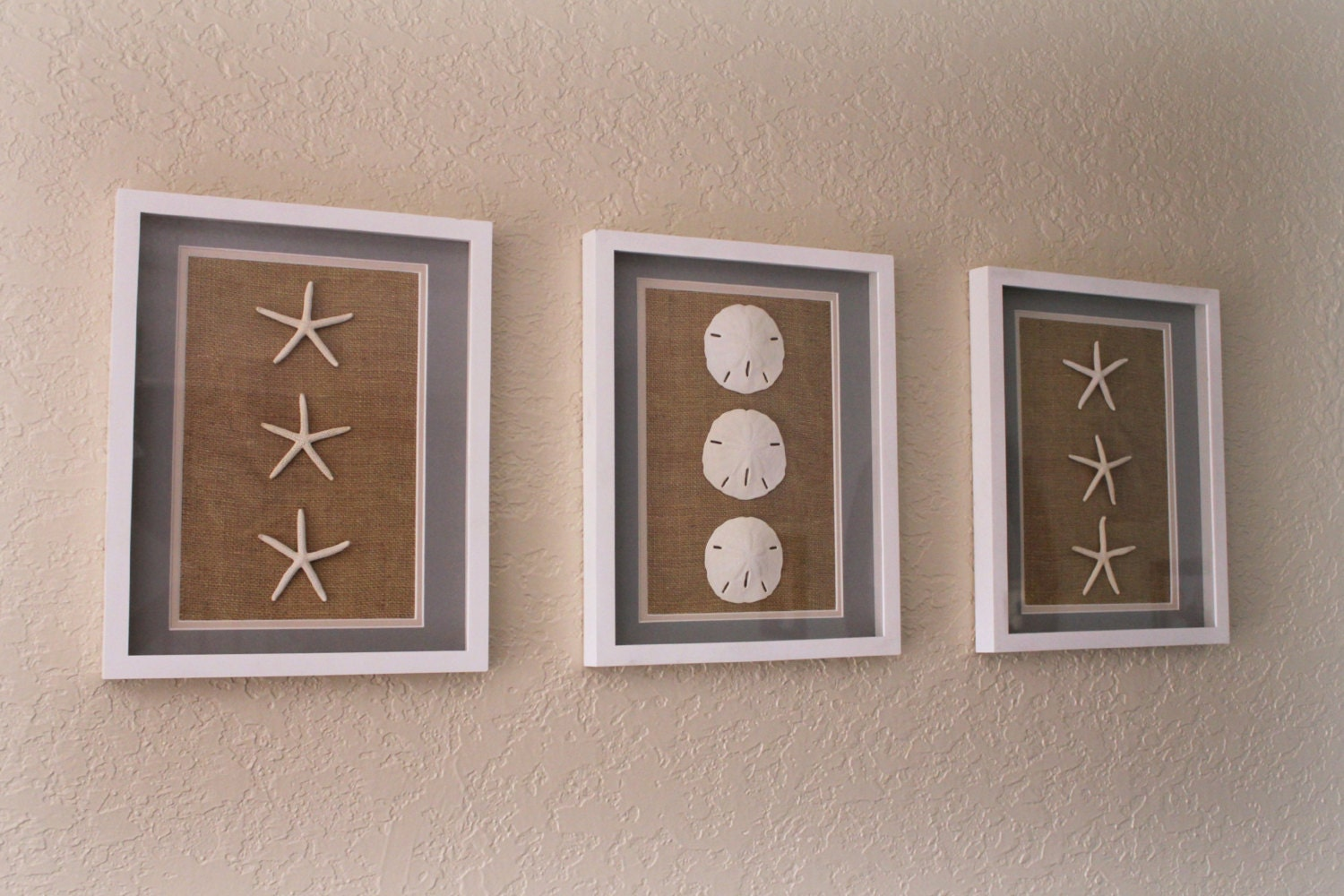 Wall Art Shadow Box : Sand dollar starfish set of wall art white shadow box