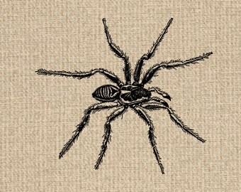 Printable Spider Images Spider Graphics Spider Clipart Spider Printable Spider Download Vintage Printable 300dpi HQ