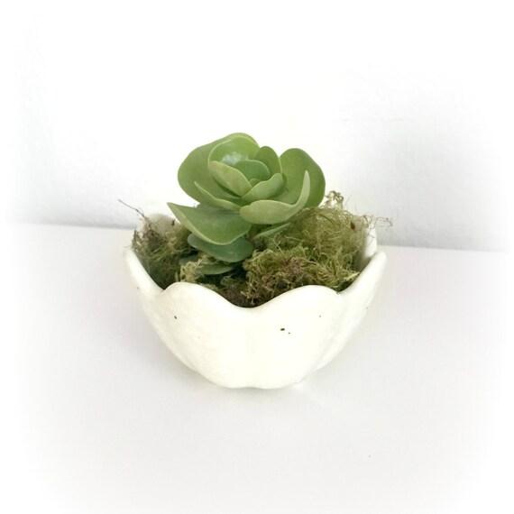 Unique White And Brown Succulent Planter Succulent Included