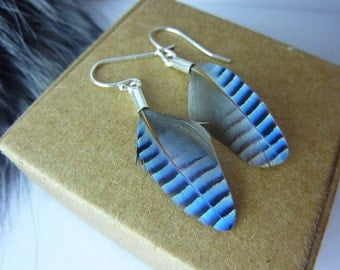 "Earrings - blue feathers ""the choosen one"" - sterling silver (925) and Blue jay feathers"