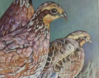 "An original bird art drawing, entitled ""Quail"""