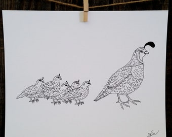Quail with Chicks Line Drawing, reproduction from original ink drawing