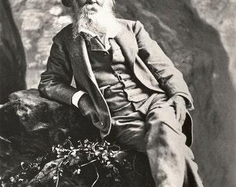 Napoleon Sarony Photo, Walt Whitman, 1878