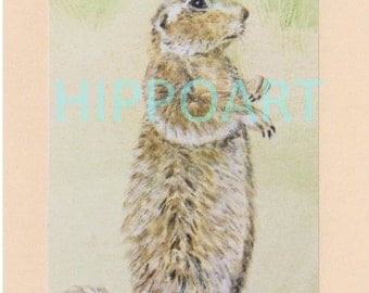 SOUTHWEST PRAIRIE DOG Greeting Card