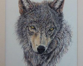Timberwolf, Original