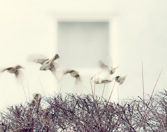 Sparrows in flight Photograph, Print, Birds Flying, Animal Photography, black and white decor, white, tan, grey, simple