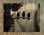 Ravens Photograph, Three Crows, Nature Art, Vintage Style, Aged Colors, Grunged - Three Like Minded Ravens