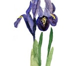 Art print Iris, print of watercolor,  purple, green, Botanical painting, wild flower art, February birthday, mothers day, Iris print