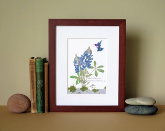 "Pressed flower print, 8"" x 10"" matted, Bluebonnets with hummingbird, no. 001"