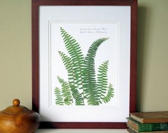 Pressed fern botanical print, 11x14 double matted, Austrailian Sword fern, no. 0090