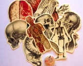 Anatomy Sticker Pack, 14 Stickers and a Free  Button