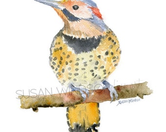 Northern Flicker Watercolor Painting - Giclee Reproduction - Watercolor Painting 5 x 7 Fine Art