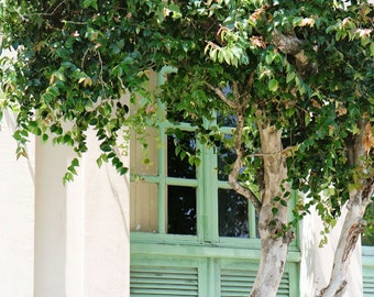 Travel Photography - Brazil Photography - Mint Window Photograph - Tree Print - Green Decor - Rustic Natural Art - Architectural Photo