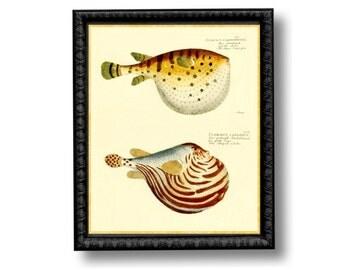 Pufferfish Blowfish Nautical Vintage Style Art Print Beach House Decor Yellow Orange Gold puffer fish