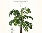 Vintage French Palm Tree Collage No. 39 - Giclee - Canvas Art - Botanical Print - Nautical Art, Beach - Coastal Decor, Wall Art - Home Decor