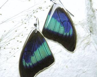 Real Butterfly Earrings. Rare Prepona omphale Earrings. Resin Earrings. Nature Inspired Earrings. Sterling Silver Dangle Earrings