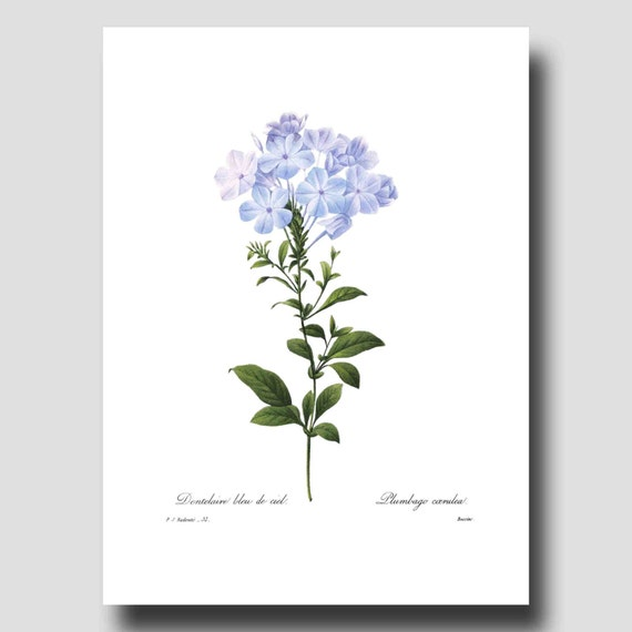 French Country Wall Decor Botanical By ParagonVintagePrints