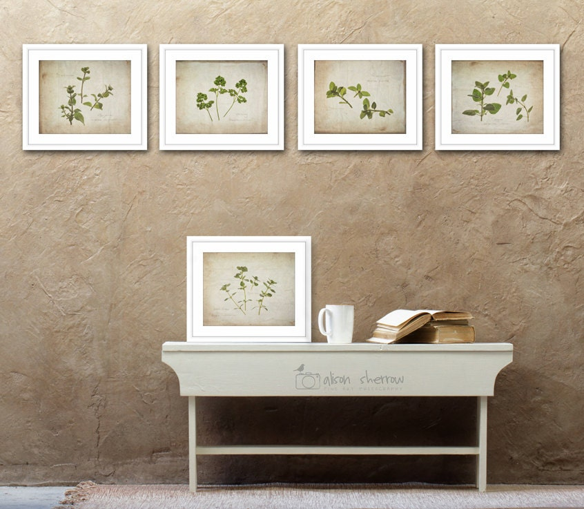 Herb Print Set Of 5 Country Kitchen Art Rustic Photography