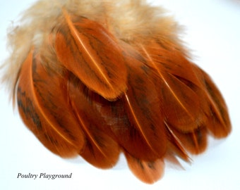 Feathers 2-3 inch Wing 75 count
