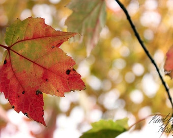 Photography, Nature, Autumn Leaf