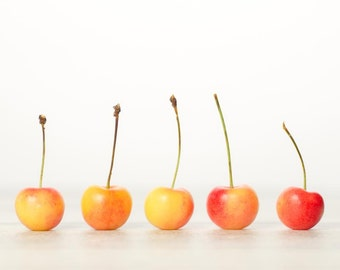 Rainier Cherry Row: 8x10 food fine art photograph; also available in other sizes.