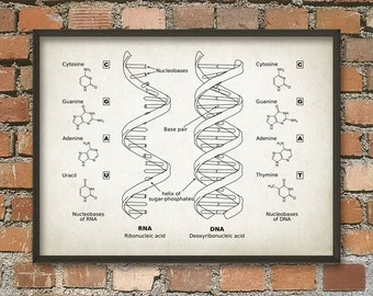 Dna and rna genetic code print set of 3 genetics poster dna and rna wall art poster biology student art poster genetics art print malvernweather Image collections
