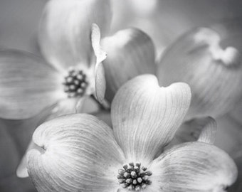 Dogwood - Photo Print, Flower Photography, tree blossom photo, black and white, muted art