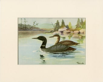 Vintage Ducks Print C. 1926 by R.E. Todhunter - Bird Wall Art, Home Decor, Christmas Gift - Ready to Frame 8x10 - Nature Animals Art
