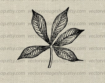 Leaf Vector Clipart, Five Leaves, Botanical Graphic Art, Commercial Use, Woodland Nature Illustration, Instant Download WEB1705BS