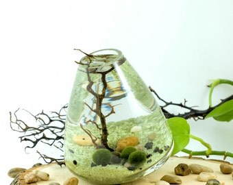 Japanese Marimo Moss Ball Terrarium aquascape coral sea fan Zen aquarium