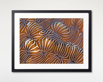 Coral Reef Art Frame With Print, Sea Animal Photo, Beach Decor, Sea Life Print, Nature Wall Art